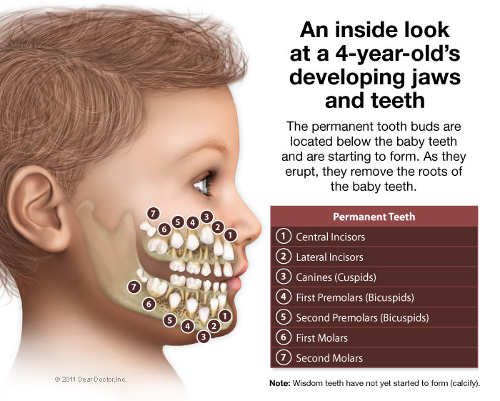 Kids developing jaws and teeth.